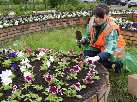 Что за цветы сажают в парках 616